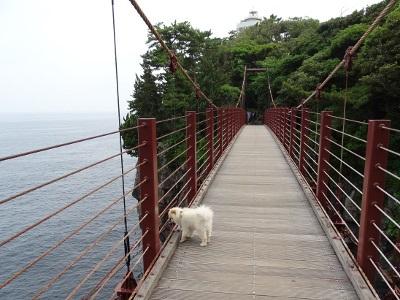 ペットと渡れるスリル満点の吊り橋