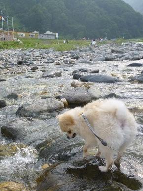 愛犬と川遊び
