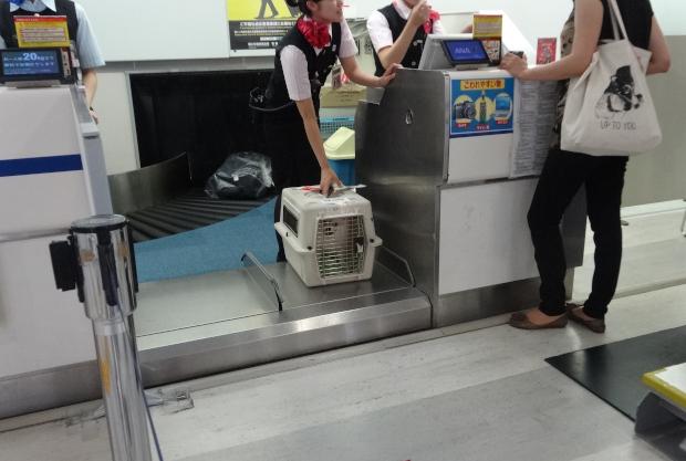 特別なお荷物をお預けの方 チェックインカウンター