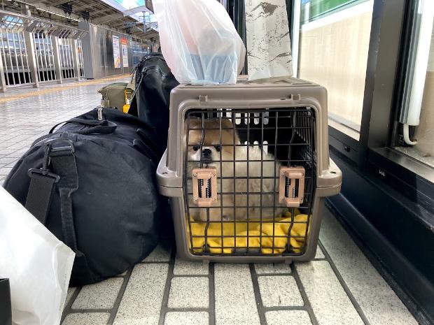 新幹線ペット乗車 ゲージ