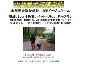 山梨愛犬訓練学校