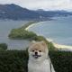 天橋立ペット旅行ガイド<br>絶景飛龍観&松葉がに<br>天橋立の見どころを凝縮