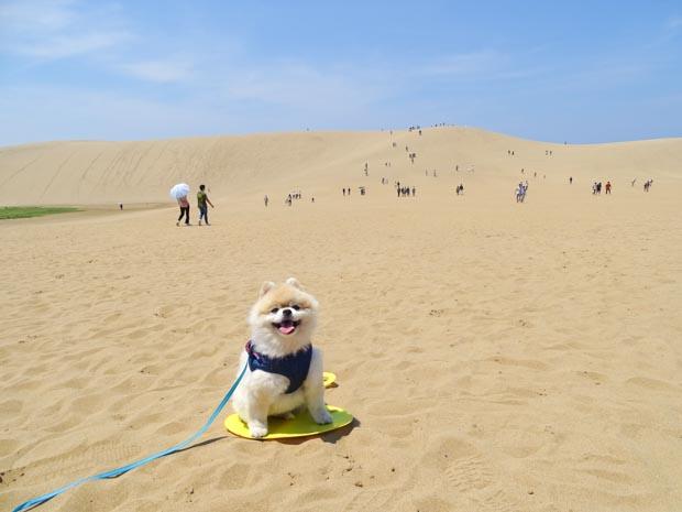 鳥取砂丘 犬連れ