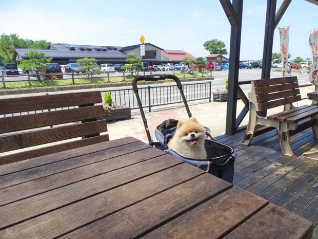 鳥取会館 犬連れ