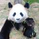 和歌山県ペット旅行ガイド<br>パンダ&世界遺産など<br>和歌山の見所を紹介