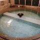 温泉が自慢のペットと泊まれる宿特集