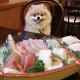 新鮮な地元食材を使った<br>食事が楽しめる<br>ペット同伴OKの宿特集